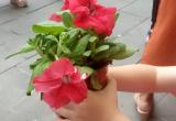 """Flor de la actividad """"Un hogar una vida"""""""